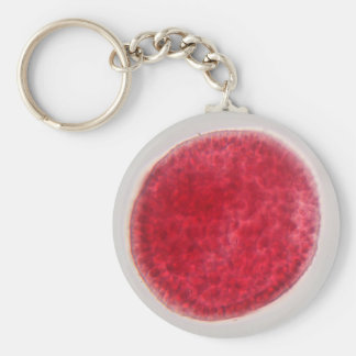 An egg cell under the microscope keychains