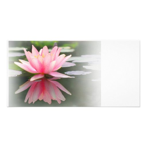 An Enchanting Water Lily in a Pond Customized Photo Card