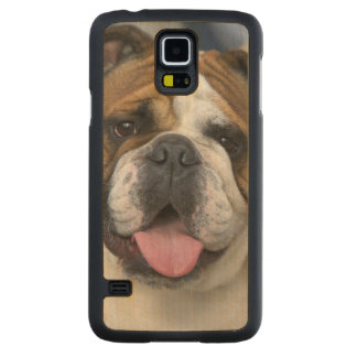 An english bulldog in Belgium. Carved Maple Galaxy S5 Case