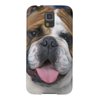 An english bulldog in Belgium. Galaxy S5 Cases