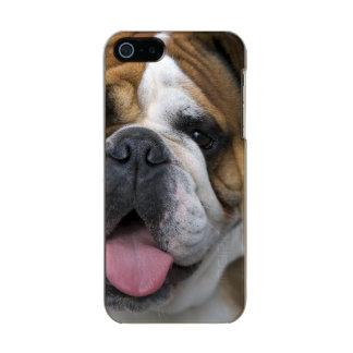 An english bulldog in Belgium. Incipio Feather® Shine iPhone 5 Case