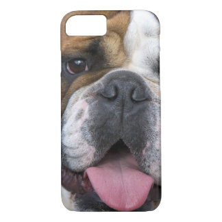 An english bulldog in Belgium iPhone 8/7 Case