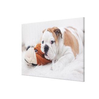 An English Bulldog Puppy Playing With A Bulldog Canvas Print