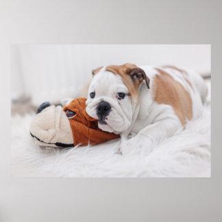 An English Bulldog Puppy Playing With A Bulldog Poster