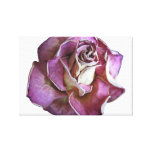 An English Rose Stretched Canvas Print