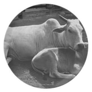 An Indian cow and its calf  lying in a farmyard Plates