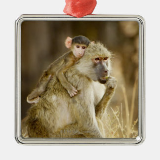 An infant Yellow Baboon(Papio Christmas Ornament