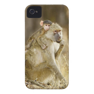 An infant Yellow Baboon(Papio iPhone 4 Cases