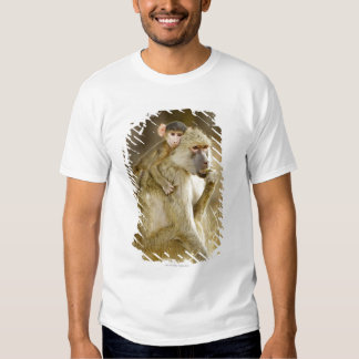 An infant Yellow Baboon(Papio Shirts