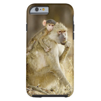 An infant Yellow Baboon(Papio Tough iPhone 6 Case