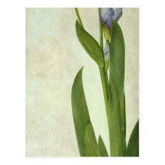 An Iris Postcard