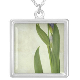 An Iris Silver Plated Necklace