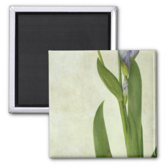 An Iris Square Magnet
