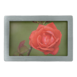 An Irish Red Rose Belt Buckles