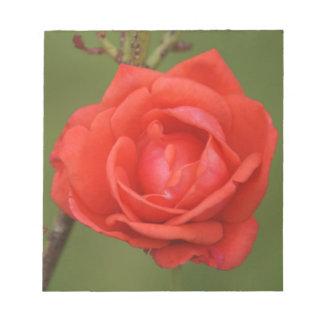 An Irish Red Rose Notepad