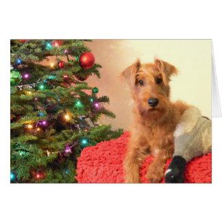 An Irish Terrier Christmas Card