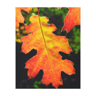 An Oak Leaf in Six Rivers National Forrest Canvas Print