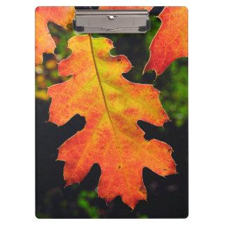 An Oak Leaf in Six Rivers National Forrest Clipboard