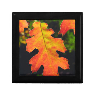 An Oak Leaf in Six Rivers National Forrest Gift Box