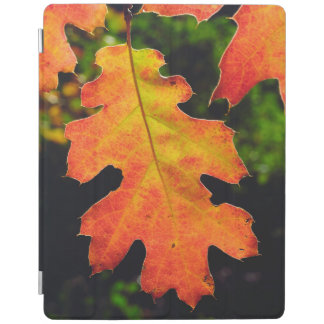 An Oak Leaf in Six Rivers National Forrest iPad Cover