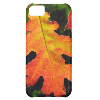 An Oak Leaf in Six Rivers National Forrest iPhone 5C Case