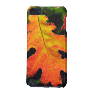 An Oak Leaf in Six Rivers National Forrest iPod Touch (5th Generation) Covers