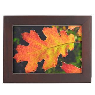 An Oak Leaf in Six Rivers National Forrest Keepsake Box