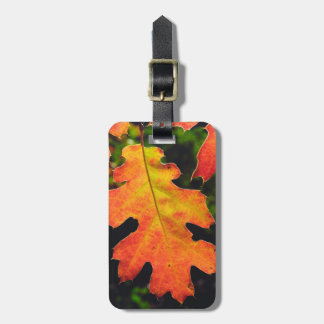 An Oak Leaf in Six Rivers National Forrest Luggage Tag