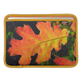 An Oak Leaf in Six Rivers National Forrest MacBook Sleeve