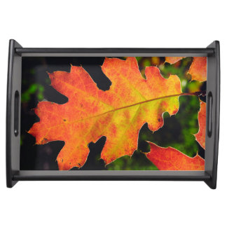 An Oak Leaf in Six Rivers National Forrest Serving Tray