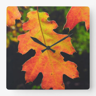 An Oak Leaf in Six Rivers National Forrest Square Wall Clock
