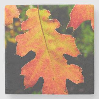 An Oak Leaf in Six Rivers National Forrest Stone Coaster