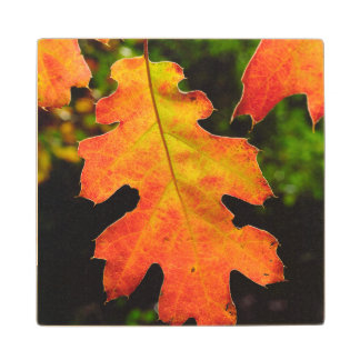 An Oak Leaf in Six Rivers National Forrest Wood Coaster