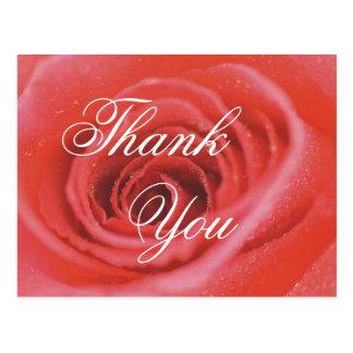 An Open Rose (1), Thank, You Postcard