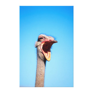 An Ostrich showing aggression Canvas Prints