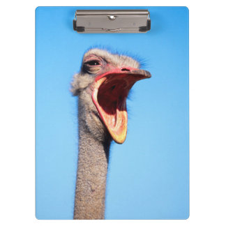 An Ostrich showing aggression Clipboard