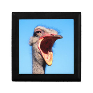 An Ostrich showing aggression Gift Box