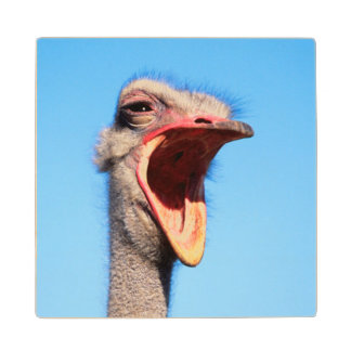 An Ostrich showing aggression Wood Coaster