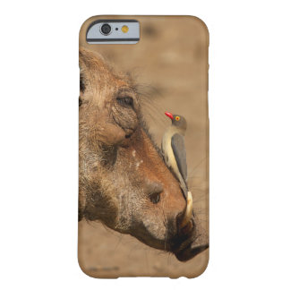 An Oxpecker on a warthogs snout, Isimangaliso, Barely There iPhone 6 Case