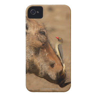 An Oxpecker on a warthogs snout, Isimangaliso, iPhone 4 Case-Mate Case