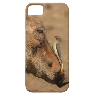An Oxpecker on a warthogs snout, Isimangaliso, iPhone 5 Covers