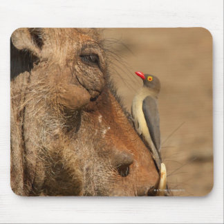 An Oxpecker on a warthogs snout, Isimangaliso, Mouse Mat