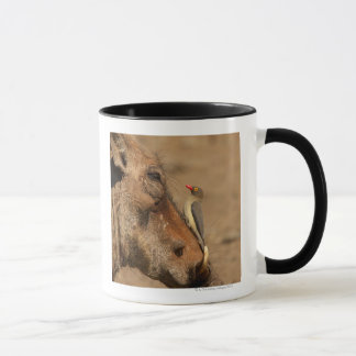 An Oxpecker on a warthogs snout, Isimangaliso, Mug