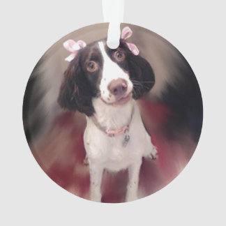 Ana the English Springer Spaniel
