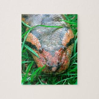 Anaconda snake jigsaw puzzle