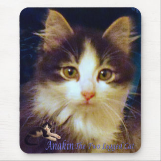 Anakin Two Legged Cat Cute Kitten Mousepad CloseUp