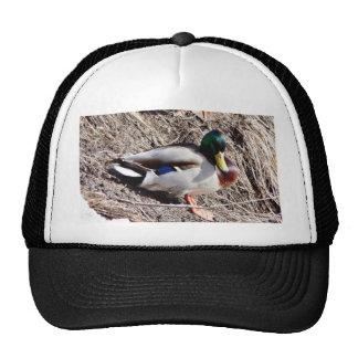 Anas Platyrhynchos Sunbathing Mallard Hat