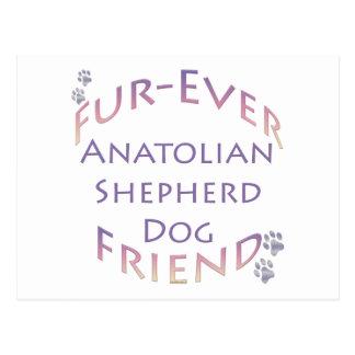 Anatolian Shepherd Dog Furever Postcard