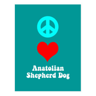 Anatolian Shepherd Dog Postcard