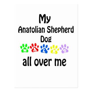 Anatolian Shepherd Dog Walks Design Postcard